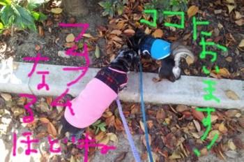 2011-11-16 11.11.08.jpg