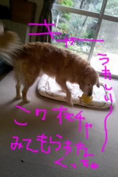 2011-12-01 13.13.43.jpg