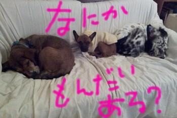 2012-01-26 19.15.31.jpg