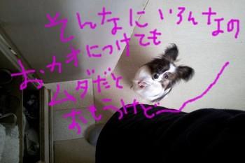2012-03-30 09.20.52.jpg