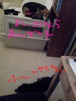 2013-11-16 20.29.57.jpg