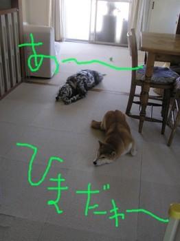 ねる (1).JPG