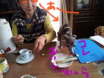 テーブルタロコちゃん.jpg
