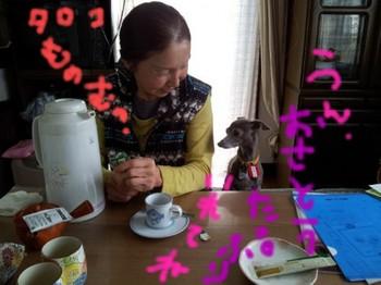 テーブルタロコちゃん1.jpg