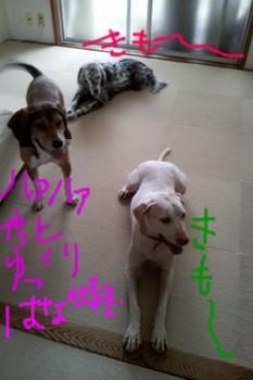 2011-10-05 08.54.39.jpg