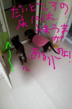 2011-11-11 10.06.13.jpg