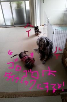 2011-11-11 10.13.21.jpg