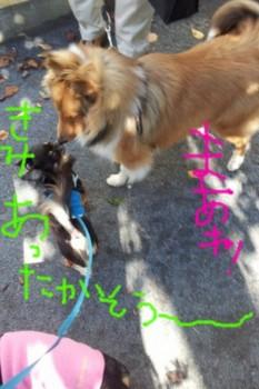 2011-11-16 11.14.56.jpg