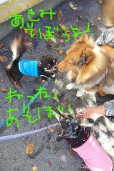 2011-11-16 11.16.23.jpg