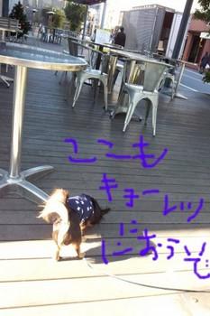 2011-12-05 11.25.53.jpg