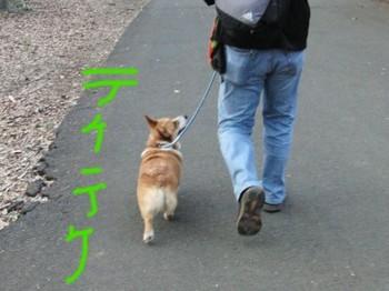 お散歩上手だなあ.JPG