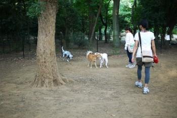 代々木で他犬とごあいさつ.jpg