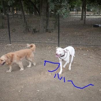 代々木で他犬をわはー.jpg
