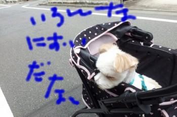 初日散歩.jpg