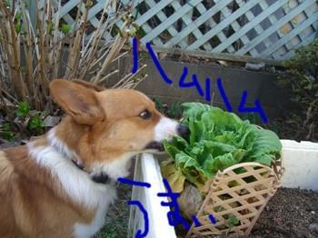 野菜食すよ.JPG